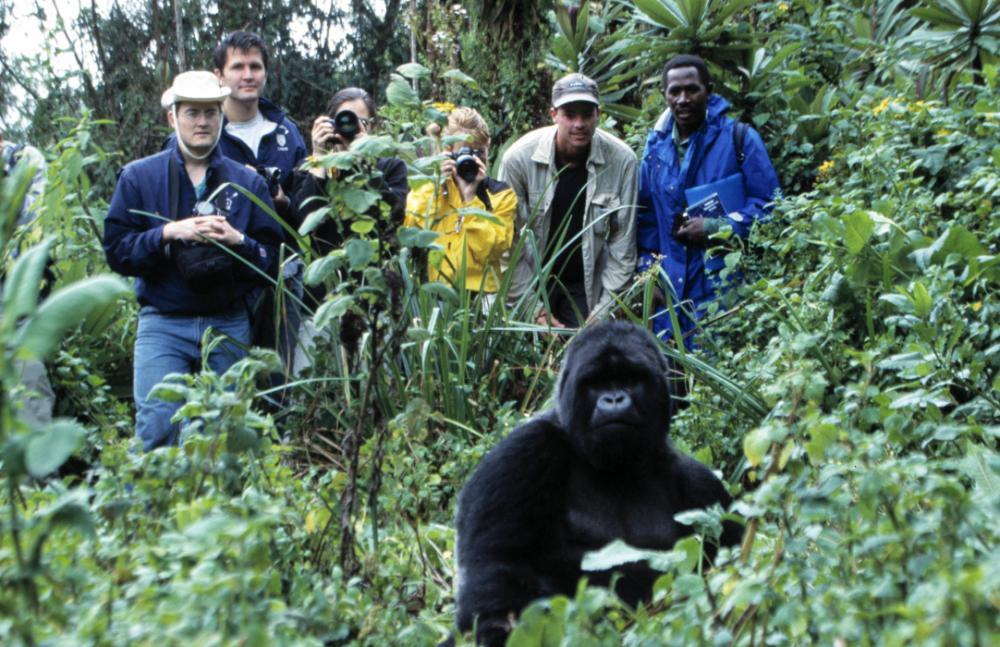 Gorilla-Trekking-1