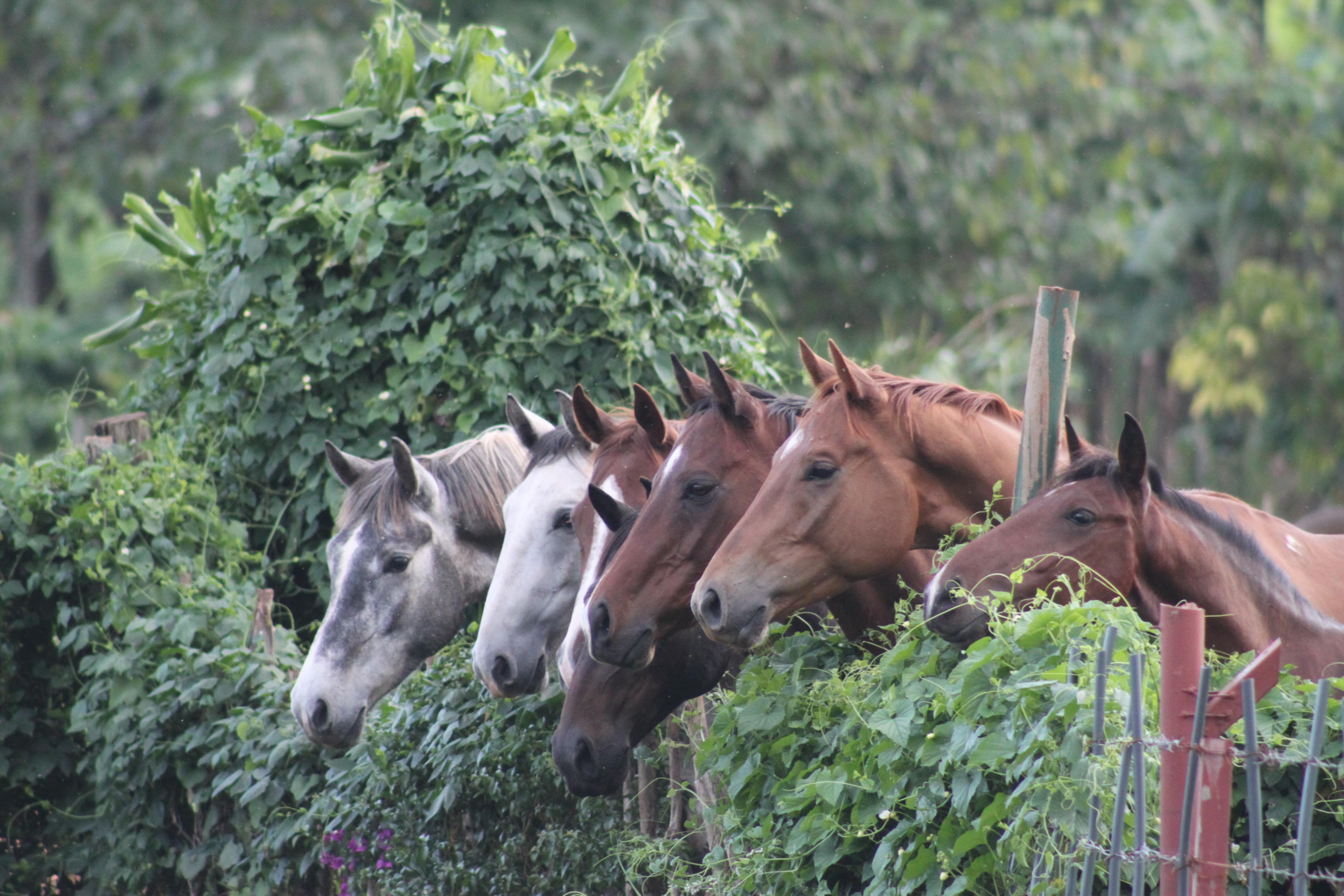 horses on fence